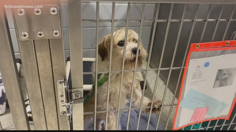Jacksonville Humane Society completely full, free adoptions offered this weekend