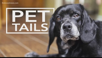 PET TAILS | 2-year-old Winter is an adorable pup who loves tennis balls