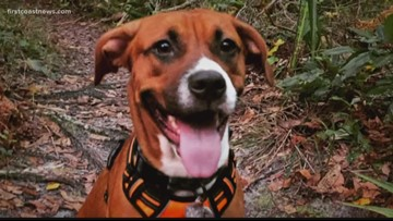 County rules prohibiting 'weapons' at parks not violated by officer who killed dog at park
