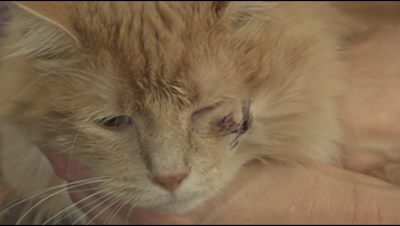 Jacksonville Beach family wants answers after cat shot in head