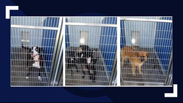 Adopt a 'forever friend' at no cost from the Nassau Humane Society thanks to anonymous donors