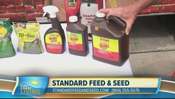 How to properly seed your lawn with Standard Feed & Seed (FCL March 22nd)