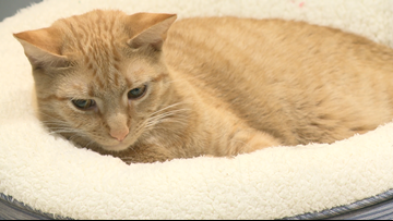 Some foster pets returned after sheltering in homes during Hurricane Dorian