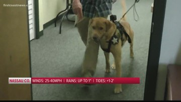 Clay County Sheriff's Office hires K9 to sniff out child porn in hidden electronics