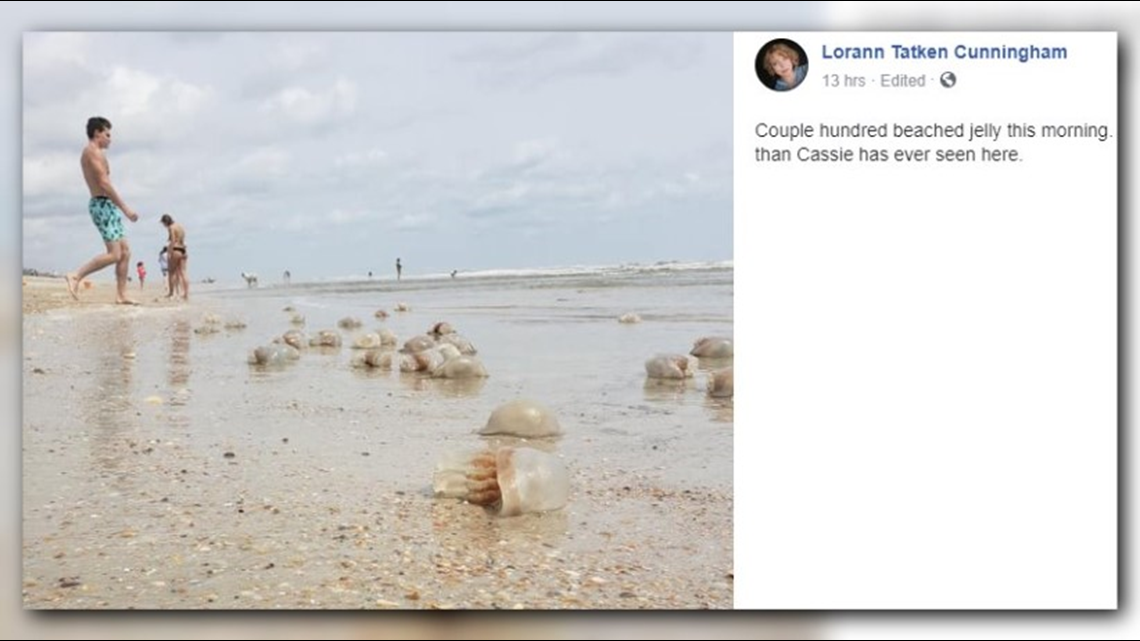 'Couple hundred' jellyfish wash up on the First Coast over the weekend