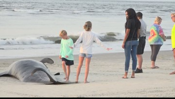 Officials confirm 47 whales beached themselves at St. Simons Island