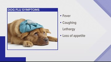 Your dogs can get the flu, too