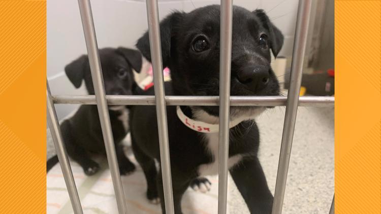 Jacksonville Humane Society halts public vet services due to staffing shortage