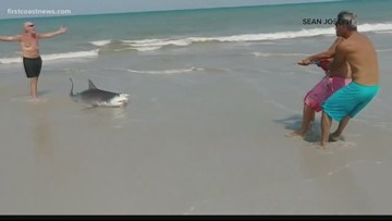 Ponte Vedra fisherman catches, releases 10-foot shark