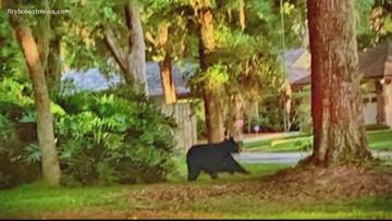 Black bear spotted in Fleming Island neighborhood