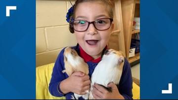 Jacksonville teacher mistakenly buys pregnant guinea pig, raises money so students can keep babies