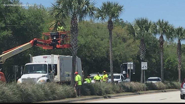Is the trimming of St. Augustine's palm trees necessary?