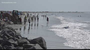 Three whales dead after mass pilot whale stranding on St. Simons Island