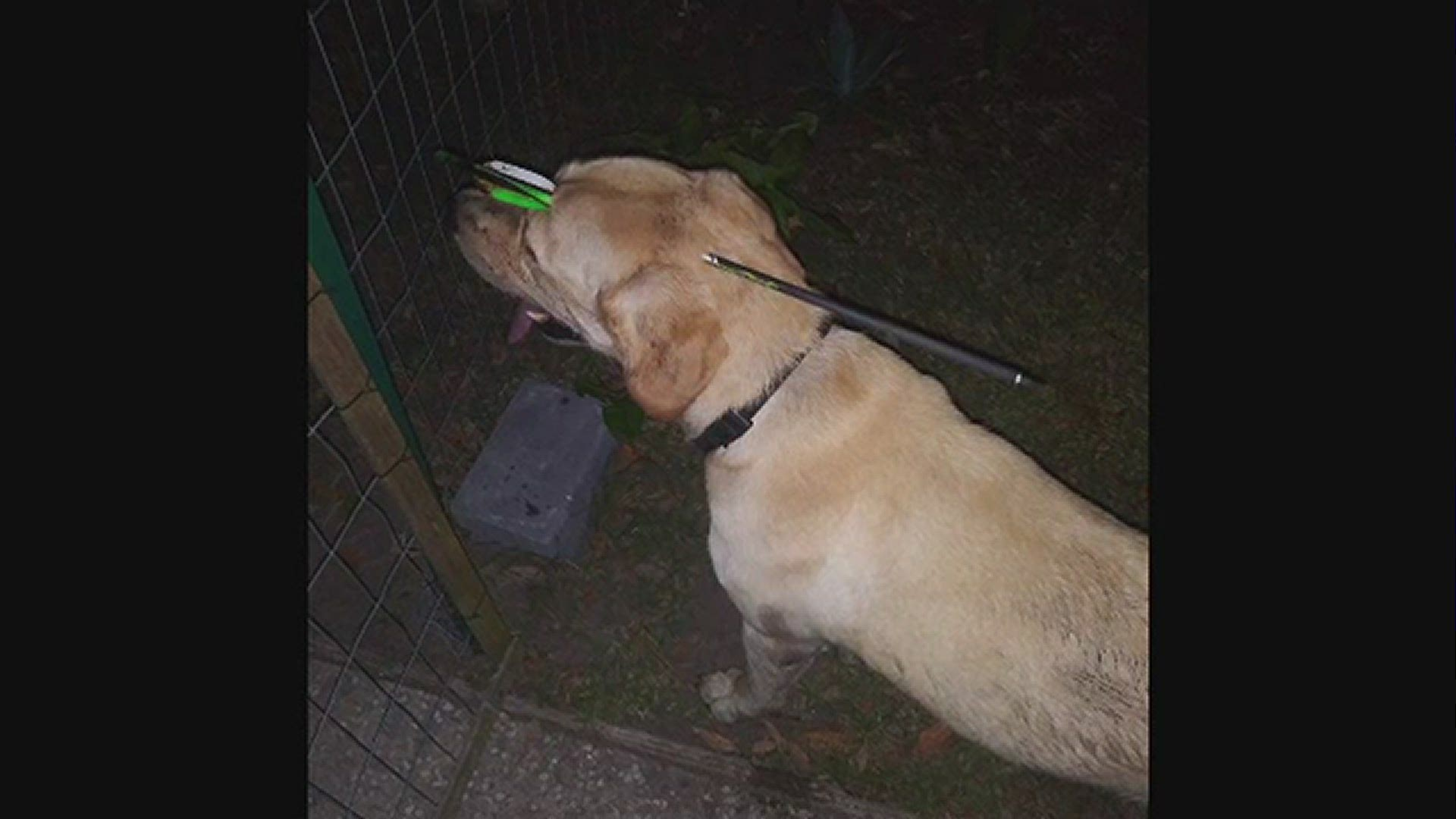 Florida Woman Charged After Dog Shot With Arrow In Head Firstcoastnews Com 466 arrow in the head products are offered for sale by suppliers on alibaba.com, of which knitting machines accounts for 9%, hairbands accounts there are 463 suppliers who sells arrow in the head on alibaba.com, mainly located in asia. dog recovering after being shot in head by arrow