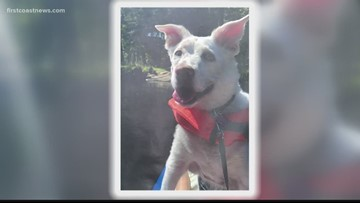 ON YOUR SIDE: A family relives the pain of losing pet after learning dog was never cremated