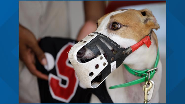 Should greyhound racing be banned nationwide?
