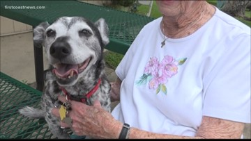 Pet Peace of Mind: Finding a new home after loss
