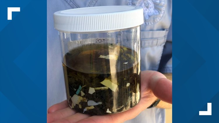 Jar's worth of plastic found inside Georgia turtle