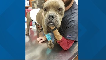 Dog found emaciated with tumor, heartworms on dead-end road in Duval County in need of forever home