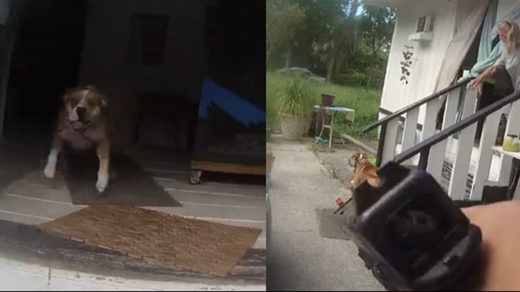 Jacksonville sheriff's officer shoots, injures dog as it charged at him, bit him