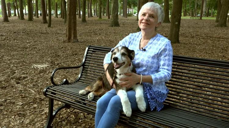 'Dumpster Dog' Sheba's story shines light on senior dogs in need of adoption
