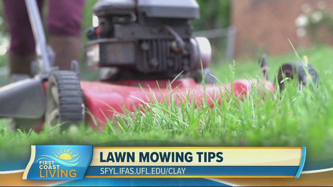 The picture-perfect lawn starts with tuning up the tools