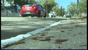 Parking solution brings more problems to St. Augustine neighboorhood