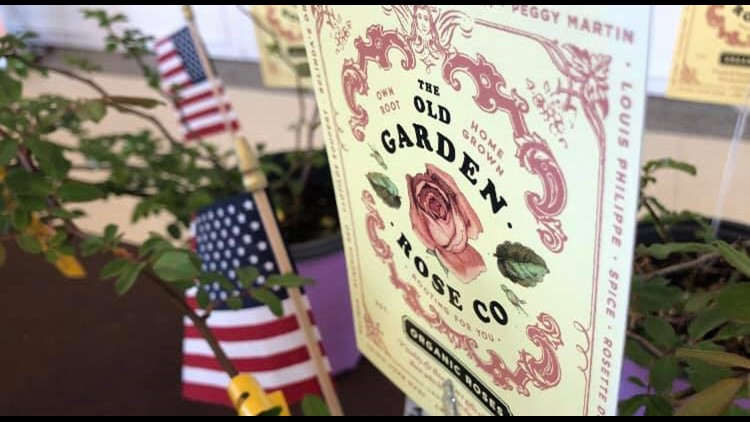 North Florida gardener teaches veterans how to grow roses as therapy