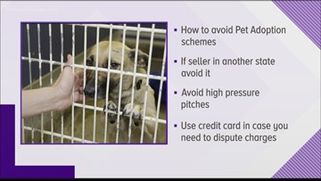 Jacksonville pet owner falls victim to internet pet adoption scam