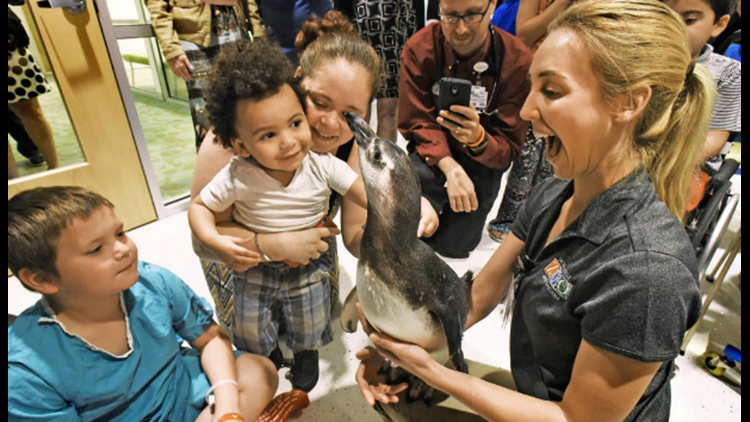 Larkin Johansen, a bird keeper at the Jacksonville Zoo and Gardens, holds Sharky, one of the penguins brought to Wolfson Children's Hospital Friday (Bob Self/Florida Times-Union)