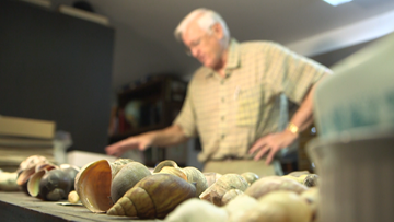 World's largest private shell collector is giving away his life's work