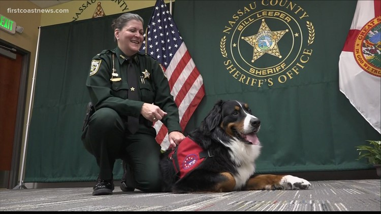 New Nassau County Sheriff's Office comfort dog puts his best paw forward