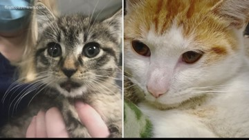 Two cats, appeared to be thrown from vehicles, need donations to pay for treatment