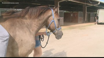 Nearly 200 horses returning home after Hurricane Dorian