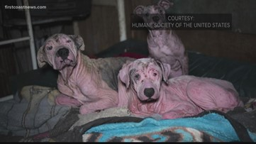 210 hoarded dogs taken from two Florida homes highlight care of animals