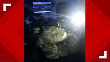 Pit bull 'hijacks' police car, eats officer's beef jerky