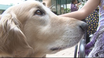 Monday Motivation: Dog comforts ill children at Ronald McDonald House