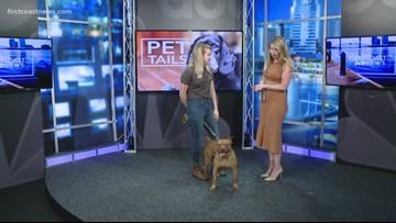 PET TAILS: Meet hammerhead!
