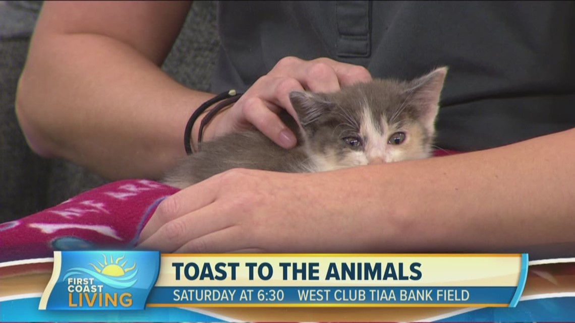 Get ready for the 21st Annual Toast to the Animals event (FCL September 16th)