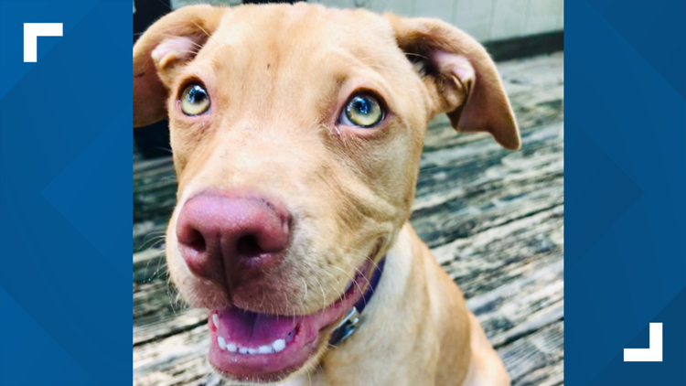 Justice for Zena: First Coast family influencing animal cruelty bills in Florida