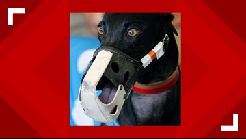 4 closed, 7 still open; Greyhound tracks reveal their plans to stop racing