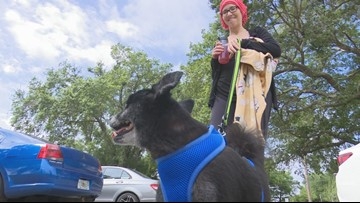 Dog missing for 3 years reunited with owners