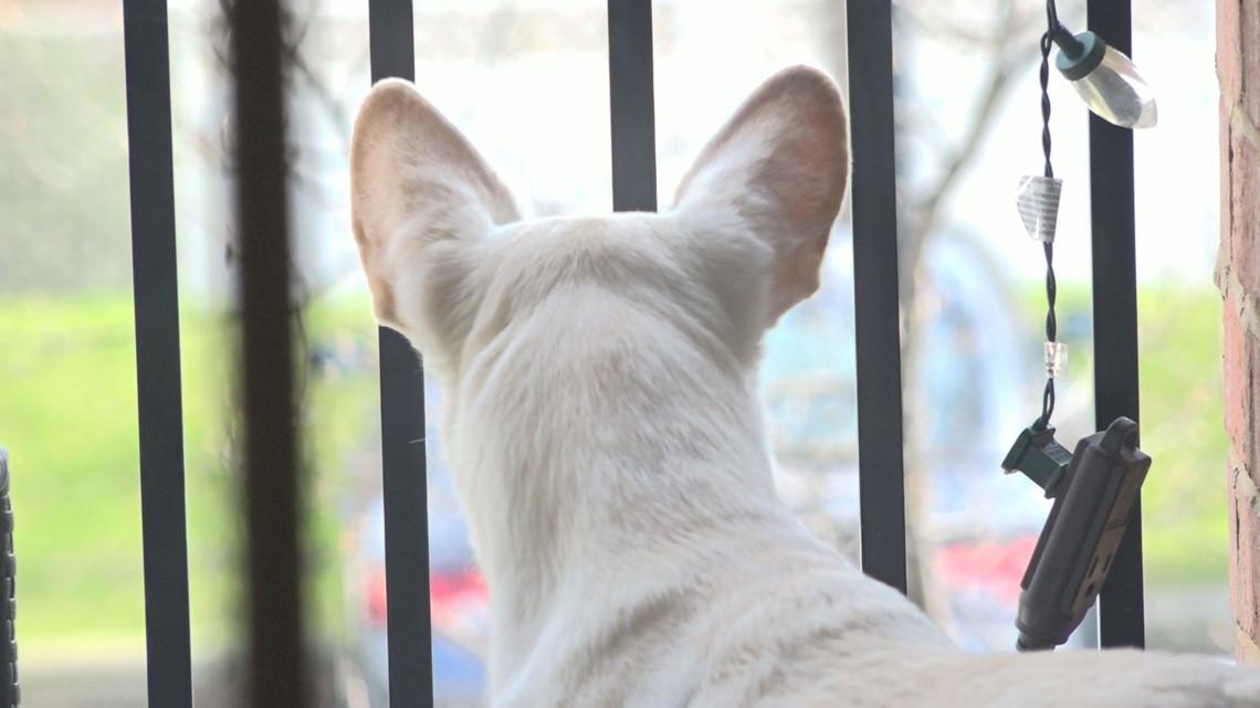VERIFY: Can my pet catch COVID-19?