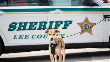 Dog found with its mouth taped shut heads out on patrol