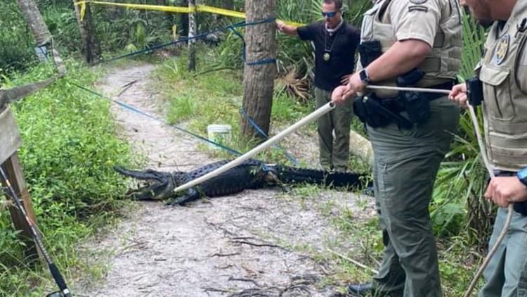 9-foot-long gator severely injures cyclist at Florida park