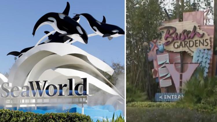 979d2820 2483 4b21 9ef6 f626938f984e 750x422 - Does Publix Sell Busch Gardens Tickets