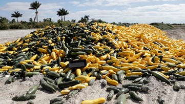 Thousands of acres of Florida fruits, veggies left to rot amid coronavirus pandemic