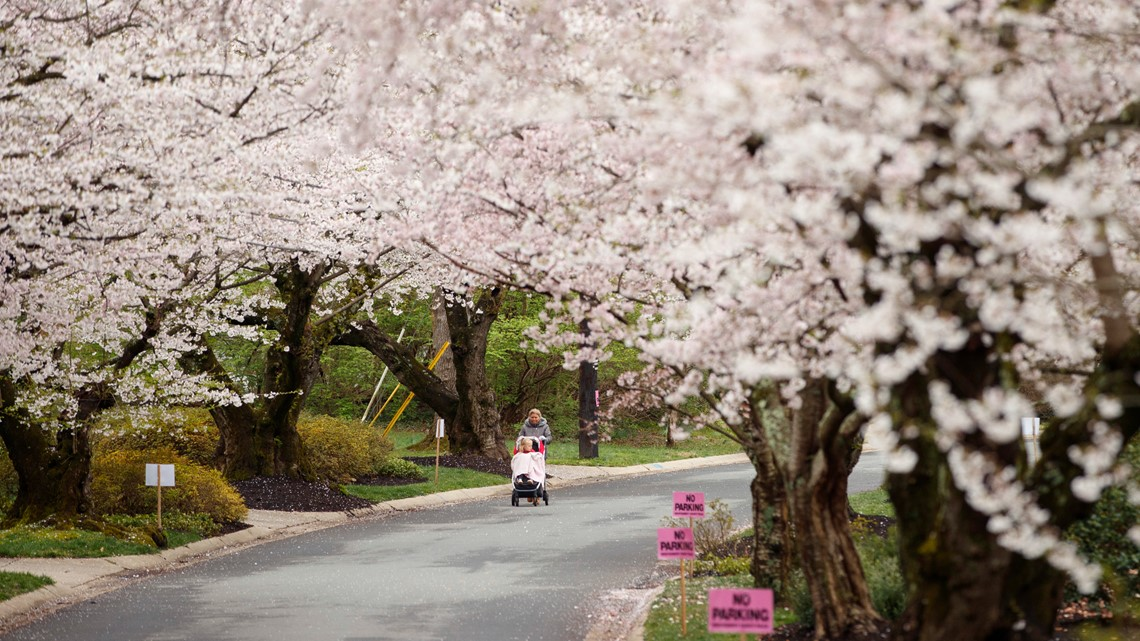 Dc cherry blossom fest gay