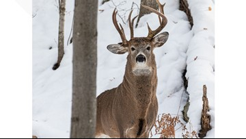 Former Michigan lawmaker takes picture of rare 3-antler deer
